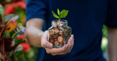 plant in coins| How to grow your money through your investments