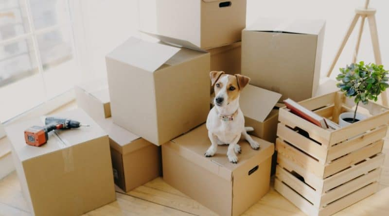 dog sitting on box staring| Top tips for moving house with your dog