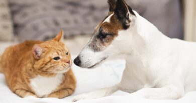 | Pet ownership what you can and cant do