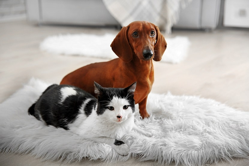 a pet subject dont assume in strata developments 1